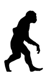 hominid