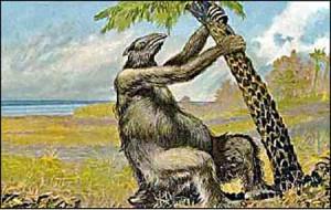 slothuprooting