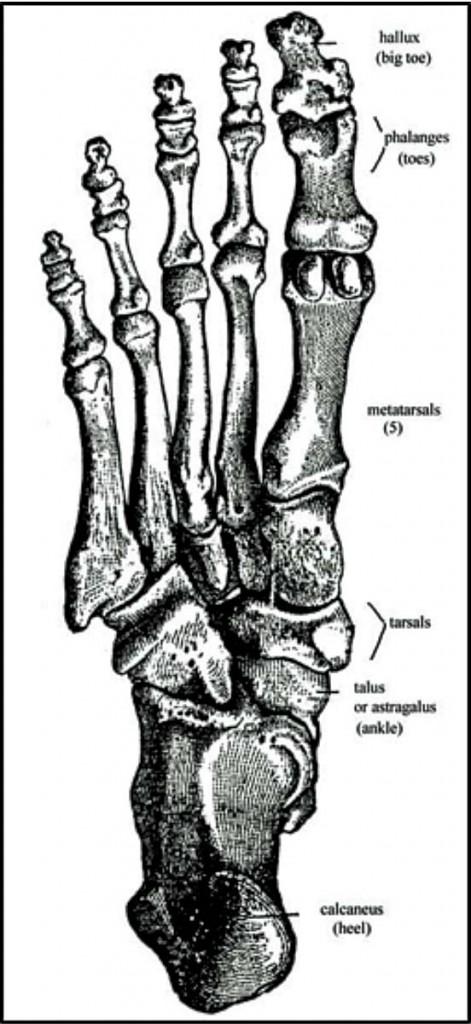 FCIT foot