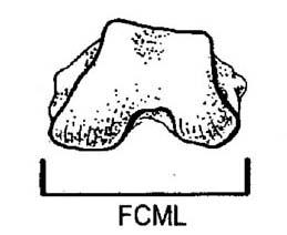 Ruff FCML
