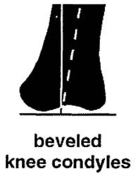 beveled knee Wilson